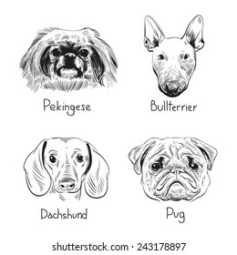 Set of hand drawn dogs, vector illustration