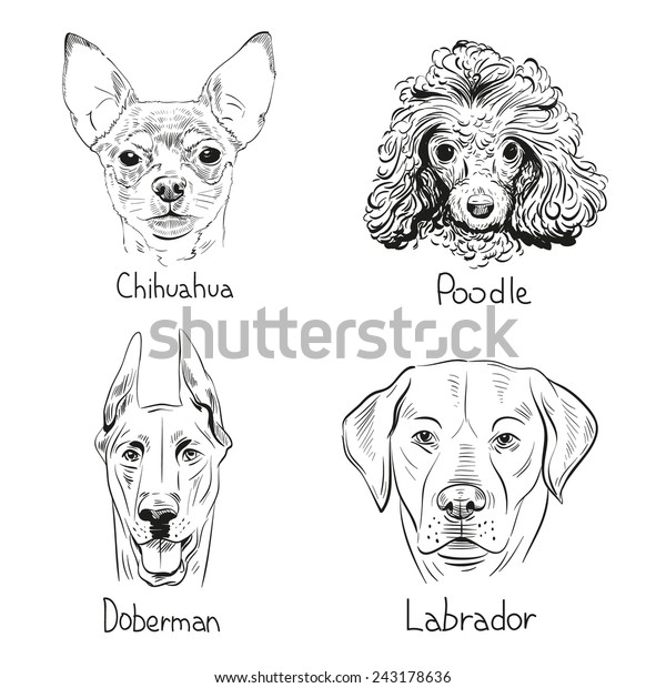 Set Hand Drawn Dogs Vector Illustration Stock Vector Royalty Free