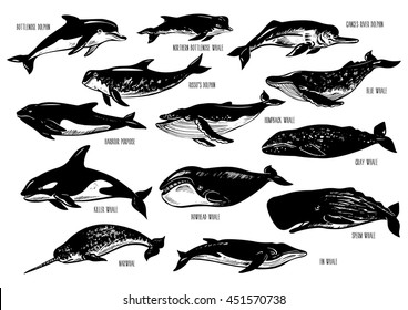 Set of hand drawn dolphins and whales. Silhouettes isolated on white.