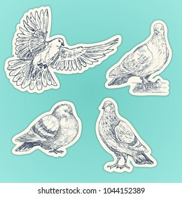 Set of hand drawn doves. Sketch of pigeons. Set of stickers