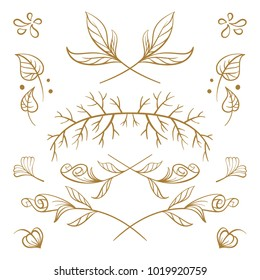 Set of hand drawn floral elements on a white background