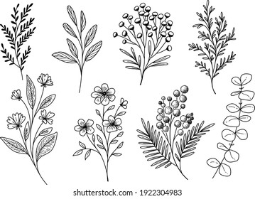 Set of hand drawn floral elements. Vector plants isolated. Decorative flowers and branches black color on white background