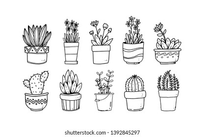 set of hand drawn flower in pots illustration, plant isolated graphic  elements for your design, leaf and flowers illustration to create romantic or vintage design