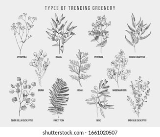 Set of hand drawn flowers, leaves and branches. Decorative greenery. Sketched vector illustration. Great for wedding invitation, textile, summer decoration designs