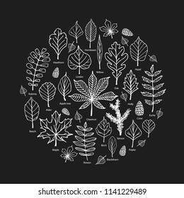Set of hand drawn forest tree leaves. Round composition from vector decorative elements of nature. Illustration of beech, chestnut, linden, oak, willow, birch, hawthorn, maple, hornbeam, ash-tree leaf