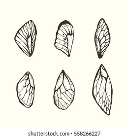 Set of hand drawn graphic decorative butterfly wings