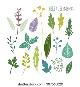 Set of hand drawn herbal graphic elements. leaves, vector illustration, isolated objects, flat design