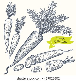 Set of hand drawn illustrations. Carrot with leaves, half of carrot and pieces of carrot. Vector.