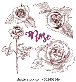 Set hand drawn illustrations Roses. Vector sketch pencil. Flowers rose isolated on white background. Summer flowers in Botanical style.