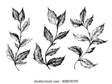 set of hand drawn ink sketch spring branches, plants with leaves isolated on white background - vector illustration