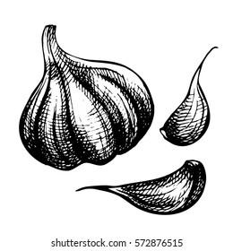 Set of hand drawn ink sketch garlic. Organic eco food. Fresh whole and slice vegetable.