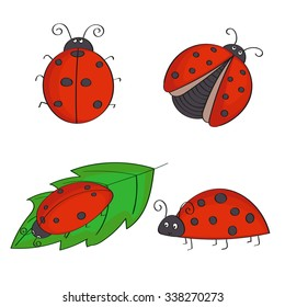 Set of hand drawn ladybugs. Vector ladybirds collection.