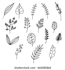 Set of hand drawn lines illustration. Leaves and branches. Black and White.