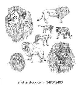 Set of hand drawn Lion.