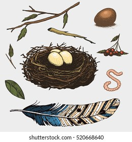 set of hand drawn nest. leaves. berry. egg and food for birds, house for birds