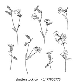 Set of hand drawn outline wild herbs. Plant painting by ink. Sketch botanical vector illustration. Black isolated campion wildflower on white background.