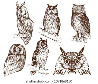 Set of hand drawn owls, in different variations, isolated on white