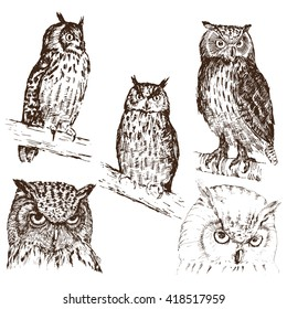 Set of hand drawn owls, in different variations, isolated on white, vector illustration
