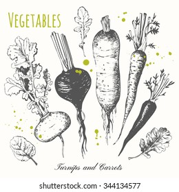 Set of hand drawn roots. Fresh organic food. Black and white. Vector illustration with sketch vegetable. Turnips, carrots and radish.