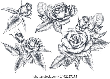 Set of hand drawn rose flowers and leaves isolated on white background. Vector sketch collection. Summer botanical illustration.