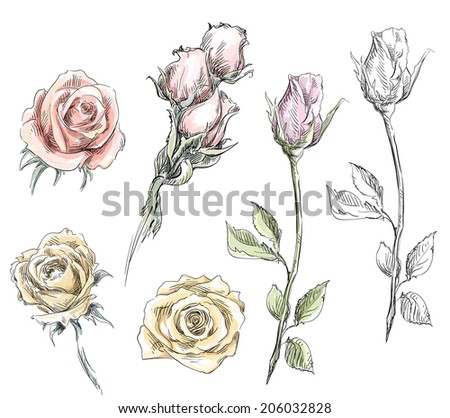 Set Hand Drawn Roses Vector Flowers Stock Vector Royalty Free