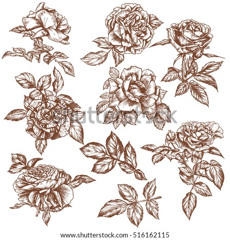 Set Hand Drawn Roses Vintage Sketchvictorian Stock Vector Royalty