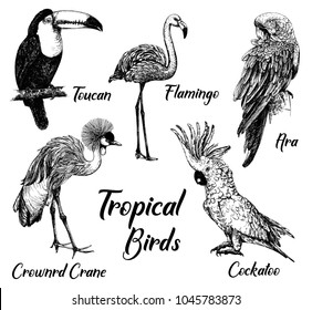 Set of hand drawn sketch style tropical birds isolated on white background. Vector illustration.