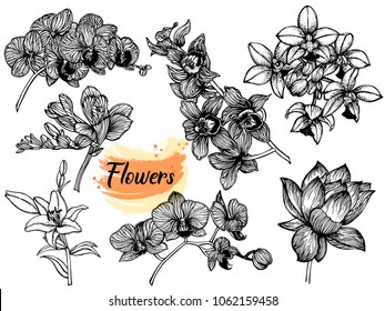 Set of hand drawn sketch style exotic flowers isolated on white background. Vector illustration.