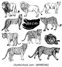 Set of hand drawn sketch style big cats. Vector illustration isolated on white background.