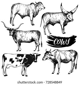 Set of hand drawn sketch style cattle. Vector illustration isolated on white background.