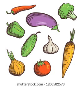 Set of hand drawn stylized vector vegetables. Tomato, cucumber, pepper, chili, eggplant, garlic, carrot and broccoli