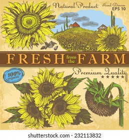 set of hand drawn sunflowers on vintage paper