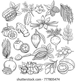 Set hand drawn superfood icons. Vector sketch healthy detox natural product of camu camu, garcinia cambogia and maca. Carob, ginger, moringa, lucuma, coji berries, mangosteen, acai, guarana and noni.