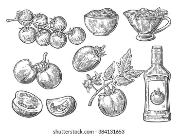 Set of hand drawn tomatoes. Vector vintage engraved illustration isolated on white background.