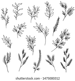 Set of hand drawn tree branches, plants, herbs and winter greenery. Black and white botanical drawings. Holiday decorations. Vector illustration.
