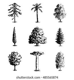 Set of hand drawn tree sketches - oak, palm tree, willow, pine, cypress, baobab, birtch maple spruce