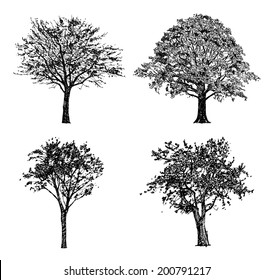 Set of hand drawn trees. Drawing illustration vector.