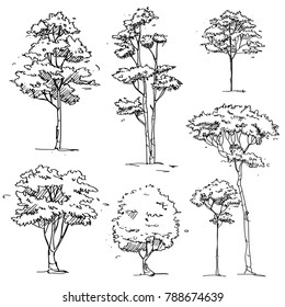 Set of Hand Drawn Trees : Vector Illustration