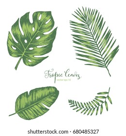 Set of  hand drawn Tropical Leaves  for your design
