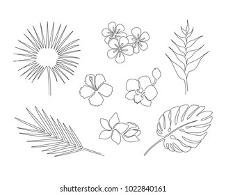 Set of hand drawn tropical plants isolated on white background. Monstera, copernicia, orchid, palm, plumeria, heliconia, hibiscus. One line drawing vector sketch.