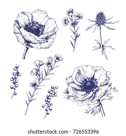 Set of hand drawn vector anemones.  Isolated outline flowers against white background.
