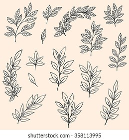 Set of hand drawn vector branches and leaves