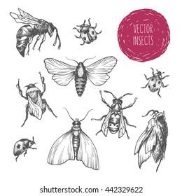ladybug sketch images stock photos  vectors  shutterstock