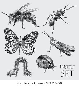Set of hand drawn vector insects in different poses isolated on white background. Detailed realistic sketches of bee, ant, locusts, ladybug, butterfly and caterpillar.