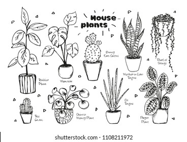 Set of hand drawn vectors of  house plants in pots on white background