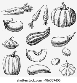 Set of hand drawn vegetables. Carrots, pumpkin, zucchini, squash, eggplant, potatoes.
