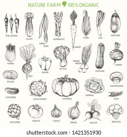 Set of hand drawn vegetables, vector illustration in vintage style.