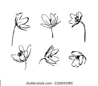 Set of hand drawn wildflowers. Outline flower plant silhouette brush ink painting. Black isolated vector on white background.