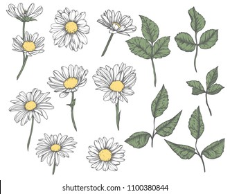Set of hand-drawn  floral elements in sketch style. Vintage Vector illustration
