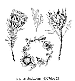 Set of hand-drawn flowers. Protea and leaves design for wedding invitations, greeting cards, packages, T-shirts, labels and other.